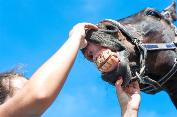 Owner checking horse teeth on a blue sky background. Multicolored summertime horizontal outdoors image.